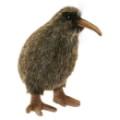 kiwi-20cmh_23728.jpg