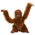 orang-outan-bebe-42cmh_23707.jpg