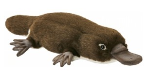 Peluche Ornithorynque - 28 cm