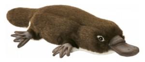 Peluche Ornithorynque - 40 cm